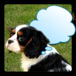 Androidアプリ「動物のきもち」をリリースしました。